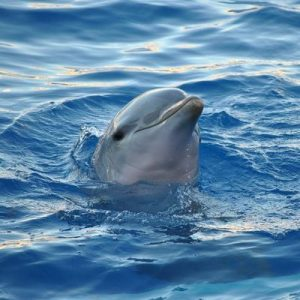 Dolphin Spirit, swimming in the lovely rejuvenating energy of the dolphins